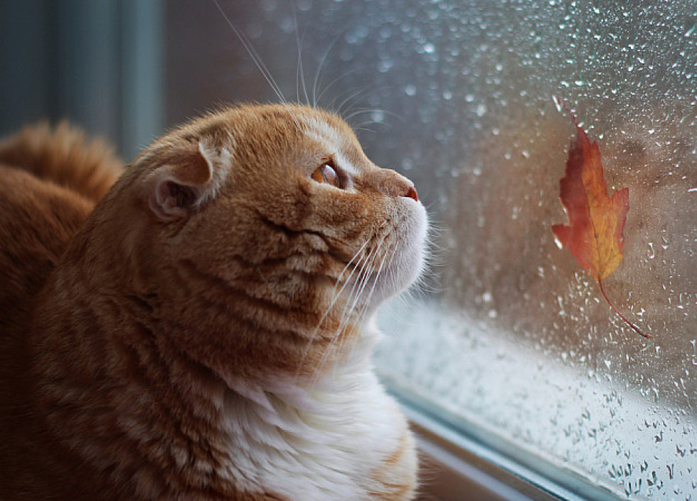 Vai ir kāds pamatojums, kāpēc grūtniece nedrīkst aiztikt kaķi? - astrologuasociacija.lv