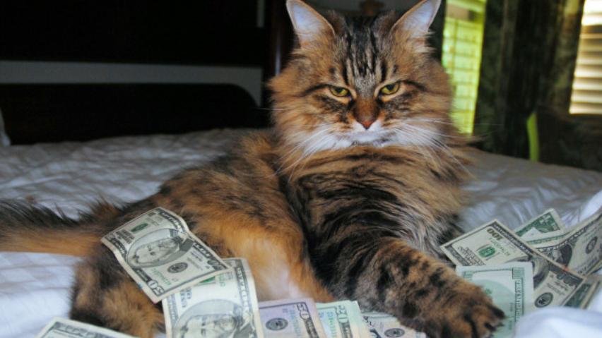Ludzā sieviete par kaķu labturības noteikumu neievērošanu saņem 150 eiro naudas sodu