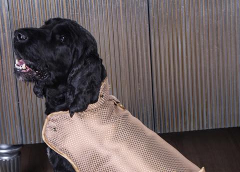 Latvijas veterinārārsti meklē iemeslu letālai suņu slimībai